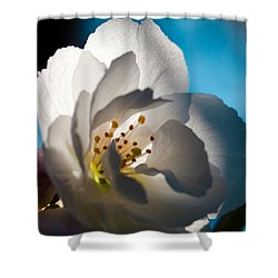 Backlit Cherry Blossom Shower Curtain by David Patterson