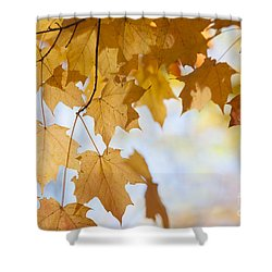 Backlit Maple Leaves In Fall Shower Curtain by Elena Elisseeva