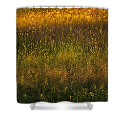 Shower Curtain featuring the photograph Backlit Meadow Grasses by Marty Saccone