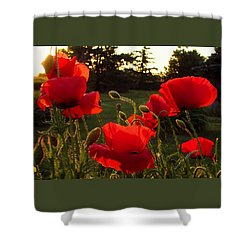Backlit Red Poppies Shower Curtain by Mary Wolf