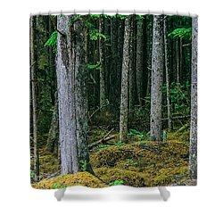 Inside View Backroad Forest Shower Curtain