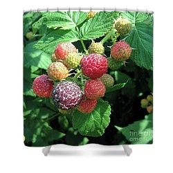 Shower Curtain featuring the photograph Fruit- Black Raspberries - Luther Fine Art by Luther Fine Art
