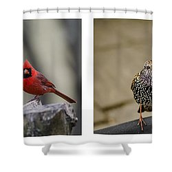 Backyard Bird Series Shower Curtain by Heather Applegate