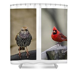 Backyard Bird Set Shower Curtain by Heather Applegate
