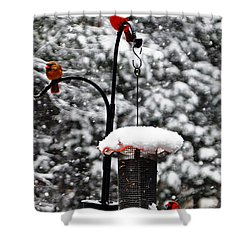 Backyard Winter Wonderland 2  Shower Curtain by Lydia Holly
