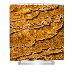 Bacterial Mat - 9 Shower Curtain by Dan Hartford