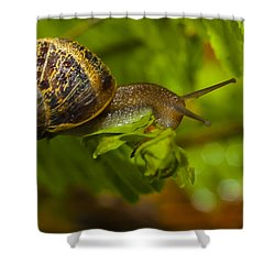 Balance Is Everything Shower Curtain