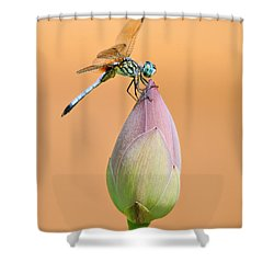Balance Of Nature Shower Curtain