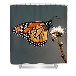Balancing Act Shower Curtain by James Brunker