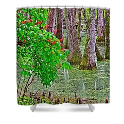 Bald Cypress And Red Buckeye Tree At Mile 122 Of Natchez Trace Parkway-mississippi Shower Curtain by Ruth Hager