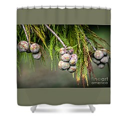 Bald Cypress Tree Seed Pods Shower Curtain