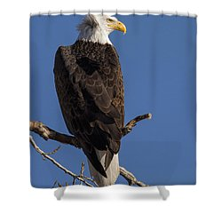 Shower Curtain featuring the photograph Bald Eagle 1 by Rob Graham