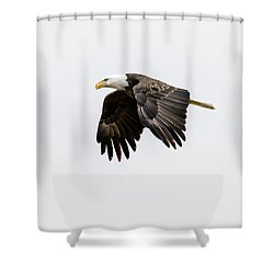 Bald Eagle 3 Shower Curtain by David Lester