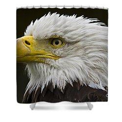 Bald Eagle - 7 Shower Curtain