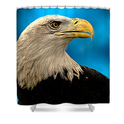 Bald Eagle And Fledgling  Shower Curtain by Bob Orsillo