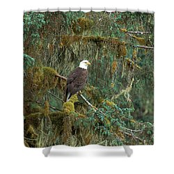 Bald Eagle Shower Curtain by Art Wolfe