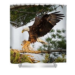 Bald Eagle Building Nest Shower Curtain