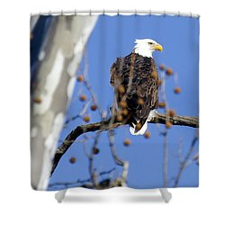 Bald Eagle Shower Curtain by David Lester