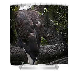 Bald Eagle Shower Curtain by David Millenheft