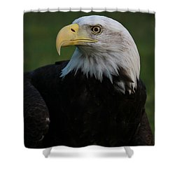 Bald Eagle Details Shower Curtain by Dan Sproul