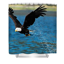 Shower Curtain featuring the photograph Bald Eagle Fishing by Don Schwartz