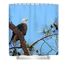 Bald Eagle Shower Curtain by Geraldine DeBoer