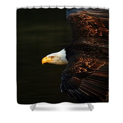 Bald Eagle In Flight Shower Curtain by Bob Christopher