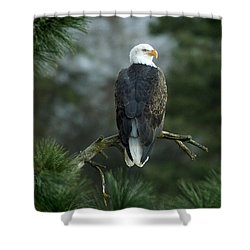 Bald Eagle In Tree Shower Curtain