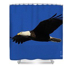 Bald Eagle Lock 14 Shower Curtain