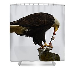 Bald Eagle Part Of Nature Shower Curtain by Bob Christopher