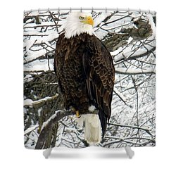 Shower Curtain featuring the photograph Bald Eagle by Penny Meyers