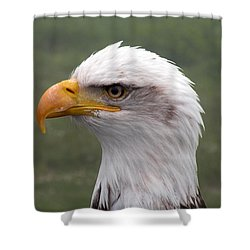 Bald Eagle Portrait Shower Curtain by Brian Chase