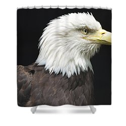 Bald Eagle Profile 2 Shower Curtain by Richard Bryce and Family