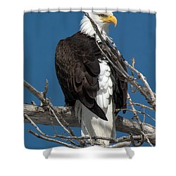 Bald Eagle Putting On The Ritz Shower Curtain