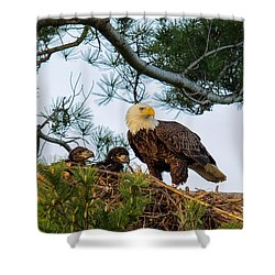 Bald Eagle With Eaglets  Shower Curtain by Everet Regal