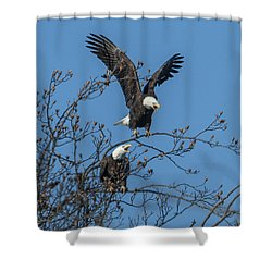 Bald Eagles Screaming Drb169 Shower Curtain