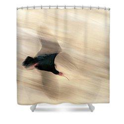 Bald Ibis Shower Curtain