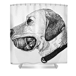 Ball Collector Shower Curtain by Susan Herber