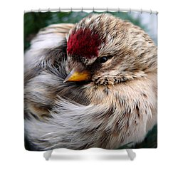 Ball Of Feathers Shower Curtain by Christina Rollo