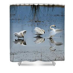 Dance Of The Trumpeters Shower Curtain