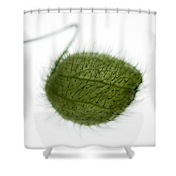 Balloon Plant Shower Curtain by Dave Bowman