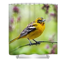 Baltimore Oriole II Shower Curtain by Christina Rollo