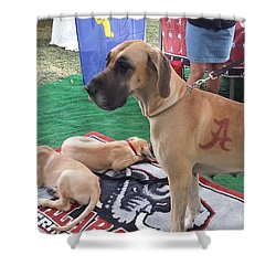Bama Great Dane Shower Curtain