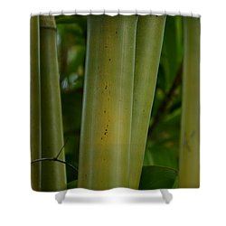 Shower Curtain featuring the photograph Bamboo II by Robert Meanor