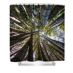 Bamboo Jungle Shower Curtain