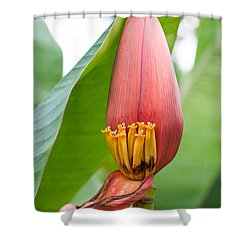 Shower Curtain featuring the photograph Banana Flower Closeup by Dan McManus