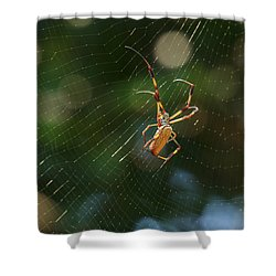 Banana Spider In Web Shower Curtain