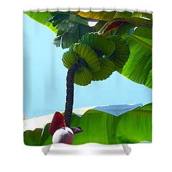 Banana Stalk Shower Curtain by Carey Chen