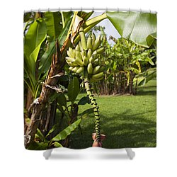 Banana Tree Shower Curtain by Jenna Szerlag