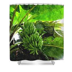Banana Trees Shower Curtain by Lanjee Chee
